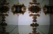 IMG_0228 (800x533)